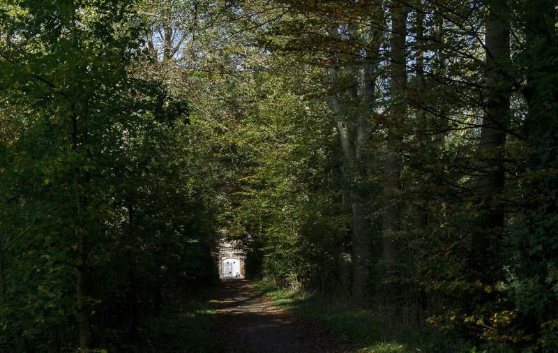 Eine Allee, ein Schotter Weg umgeben von Bäumen führt auf das Haus Rüschhaus zu.