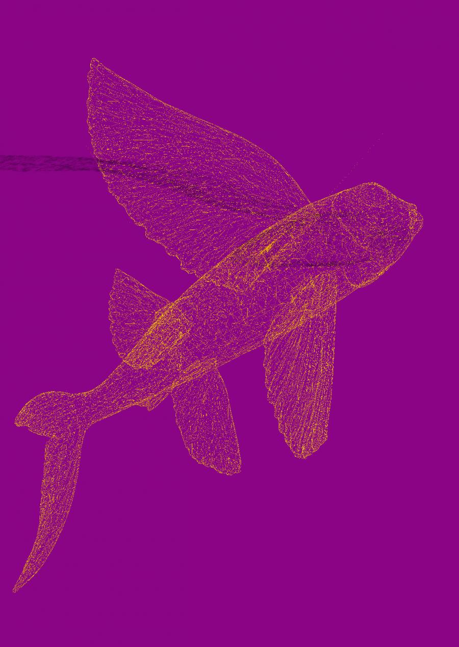fischflyerlila