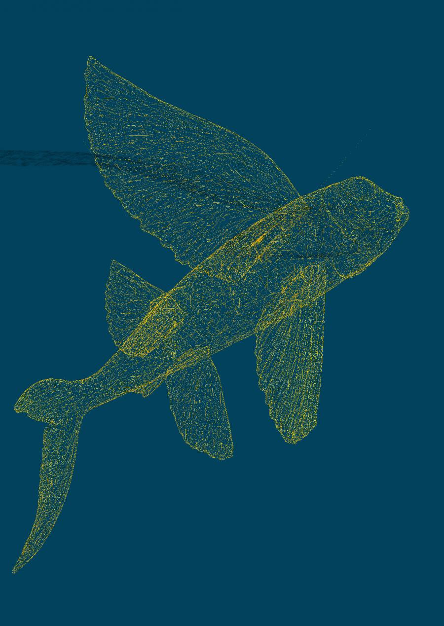 fischflyertblau