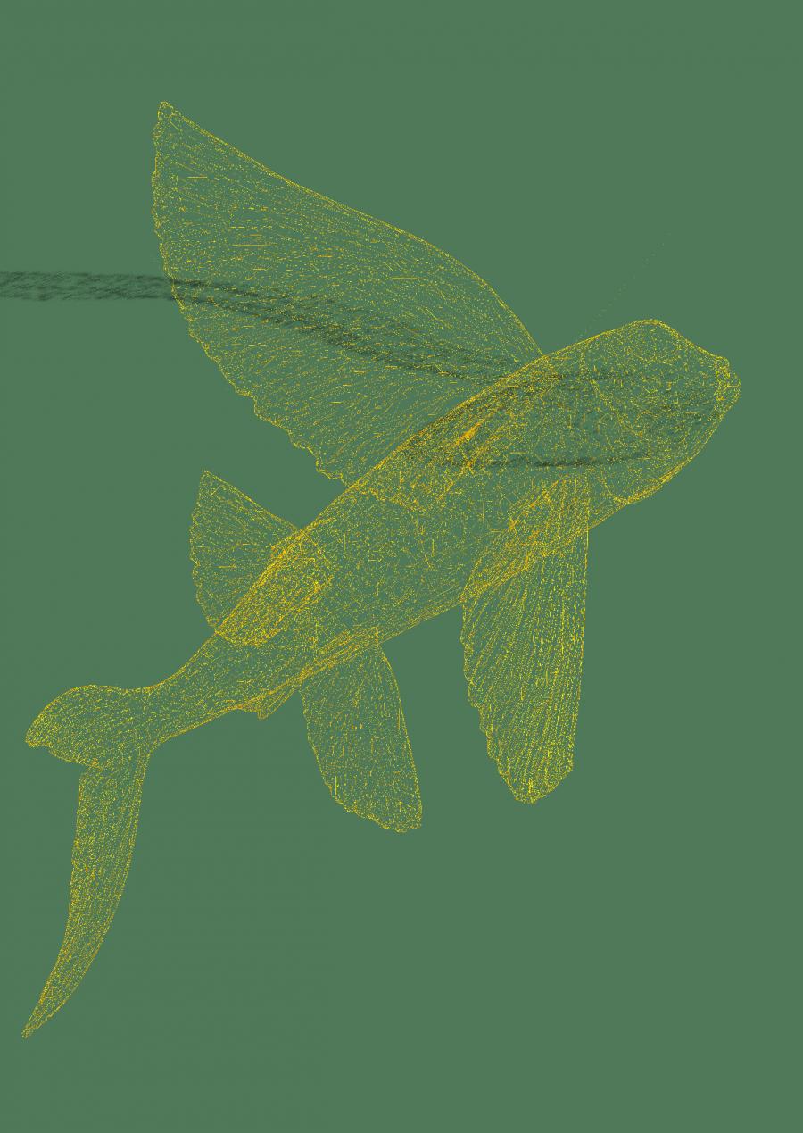 fischflyergruen